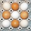 Kennzeichnung von Eiern