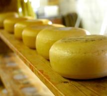 Käseherstellung oder Wie kommen die Löcher in den Käse?